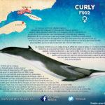 3-BIO F002 CURLY FR